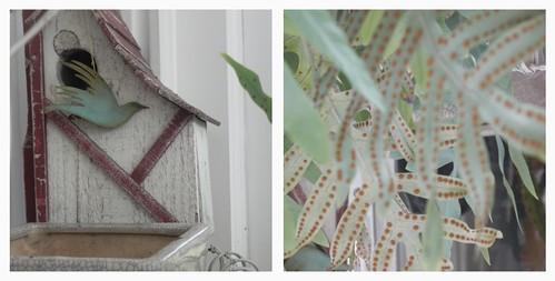 birdhouse and fern