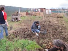 compostiere agli orti regolamentati 41