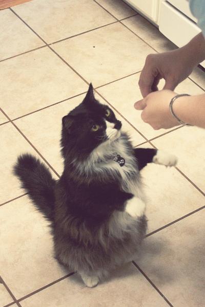 DITL 7: Begging