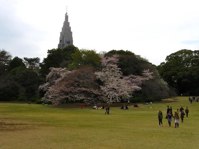 新宿御苑とドコモタワーのフリー写真素材