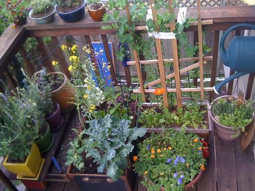 Cait's Balcony Garden