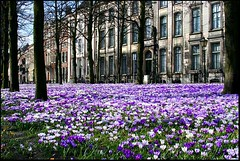 "Spring in The Hague • <a style=""font-size:0.8em;"" href=""http://www.flickr.com/photos/45090765@N05/5606349591/"" target=""_blank"">View on Flickr</a>"