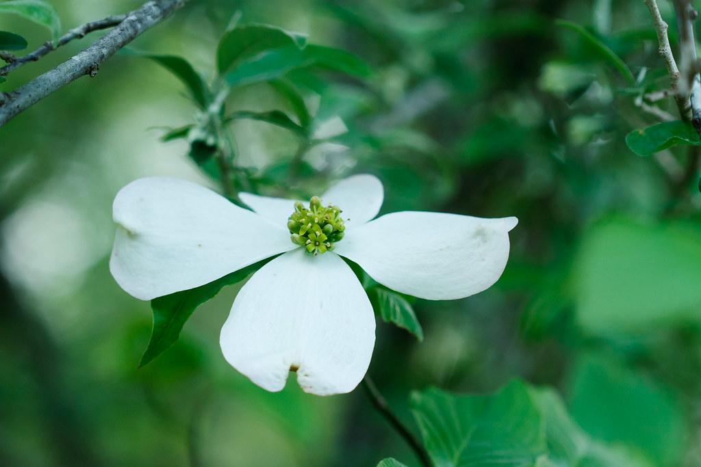White Flower #2