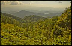 Make me a cuppa! (Prem Kandasamy) Tags: trees sky mountains green water leaves canon eos highlands tea dam central victoria reservoir sri lanka slopes 550d rangala