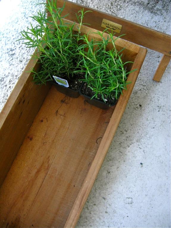 balcony gardening plants 002