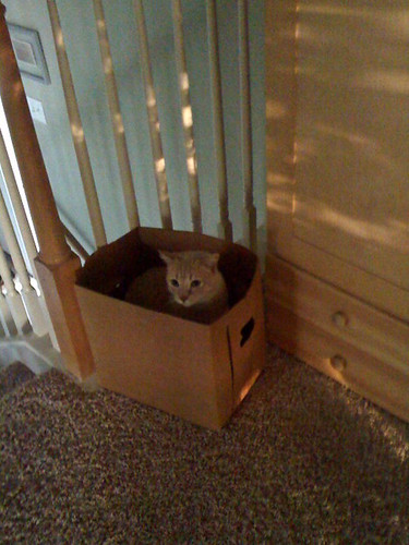 Loaf in the box