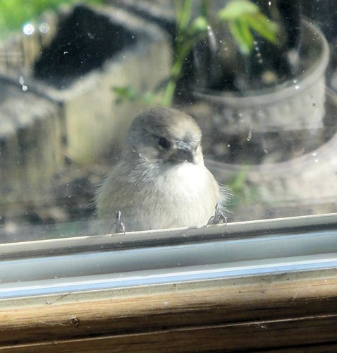 1bird at window clint collier