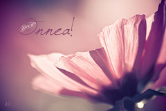 Siru 17 v (Chrisseee) Tags: pink autumn flower canon soft dof card greeting onnea everythingpink canon550d kristiinahillerstrm lightroom33
