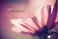 Siru 17 v (Chrisseee) Tags: pink autumn flower canon soft dof card greeting onnea everythingpink canon550d kristiinahillerström lightroom33