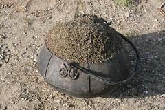 Heidekraut nach dem Auskochen im Kessel -Wikinger Museum Haithabu WHH 09-04-2011