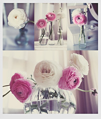 Happy Easter/ Felices Pascuas/ Frohe Ostern! (www.juliadavilalampe.com) Tags: pink flowers light stilllife white flores luz cuatro licht photo ranunculus getty gettyimages chaulafanita commentsoff juliadvila juliadavila juliadavilalampe