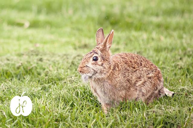 Week 16 - Bunny