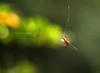 With Love - Spiderman (Harvarinder Singh) Tags: green nature web spiderweb spiderman spidey spidermanweb harvarindersinghphotography harvarindersingh spidermaninlove spidermanweblove