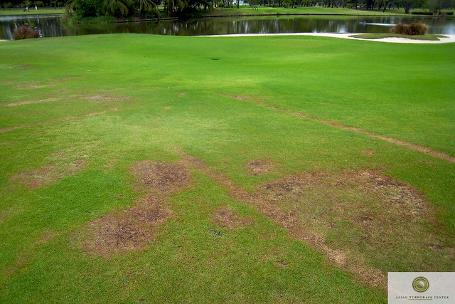 paspalum and zoysia on a fairway in Thailand