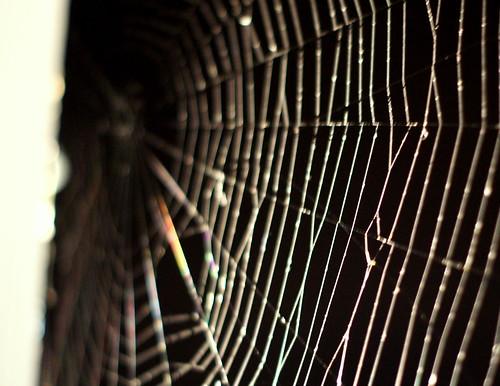 Night Web