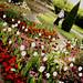 flower garden2