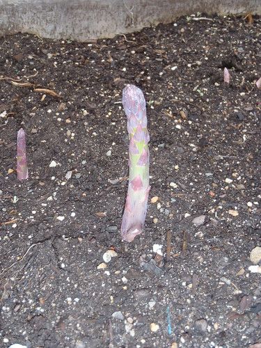 Asparagus Closeup