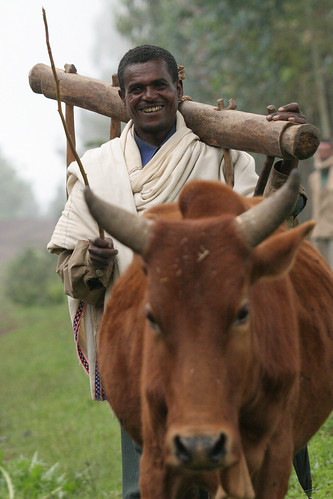 Ploughing in Ethiopia