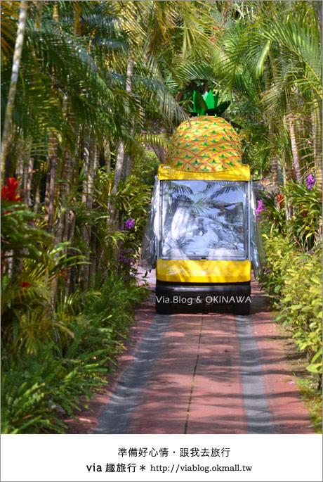 【via的沖繩旅誌】名護鳳梨公園~可愛又香甜的鳳梨樂園!11