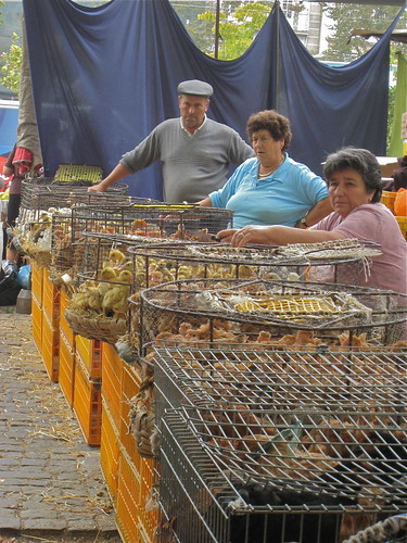 Market in Barcelos, Portugal