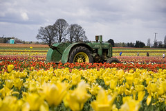 Tractor (dkjd) Tags: trees tractor flower green festival oregon fun spring tulips johndeere woodburn