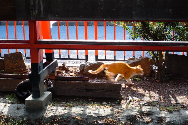 Today's Cat@2011-05-06