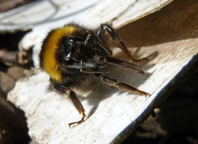 24146 - Bee