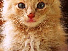 tart (messycupcakes) Tags: animal animals cat paw kitten kittens kitties meow