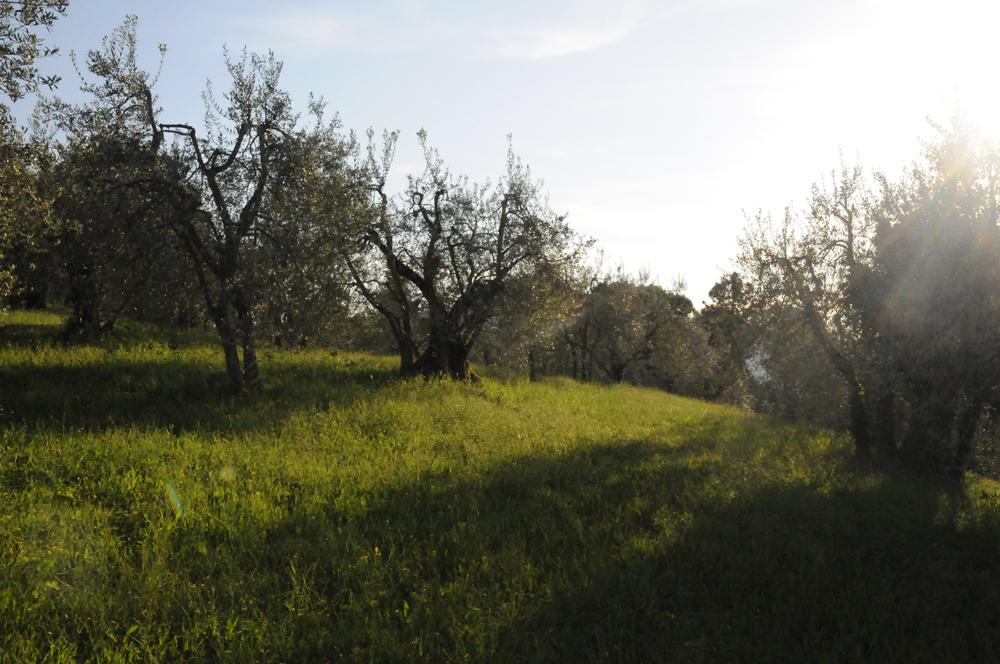 Tuscany, San Gimignano