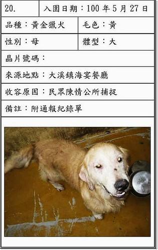 「需要免費中途」新屋收容所剛被逮捕進去的黃金獵犬,為避免感染犬瘟,需要暫時的隔離地,會負責醫療和後續,請幫忙,20110528