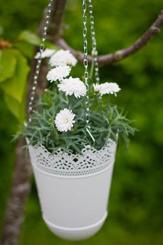 Cute flower in a pot