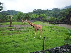 20110602酷節能體驗營 (22) (fifi_chiang) Tags: zoo taiwan olympus taipei ep1 木柵動物園 17mm 環保局 酷節能體驗營