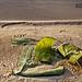 Madagascar Ankanin'Nofy Palmarium plage