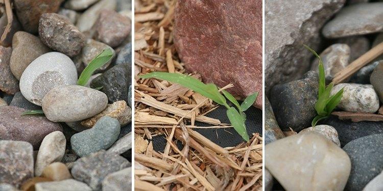 06-25-crabgrass