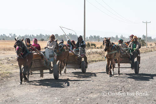 The horsecarts of the Bale region