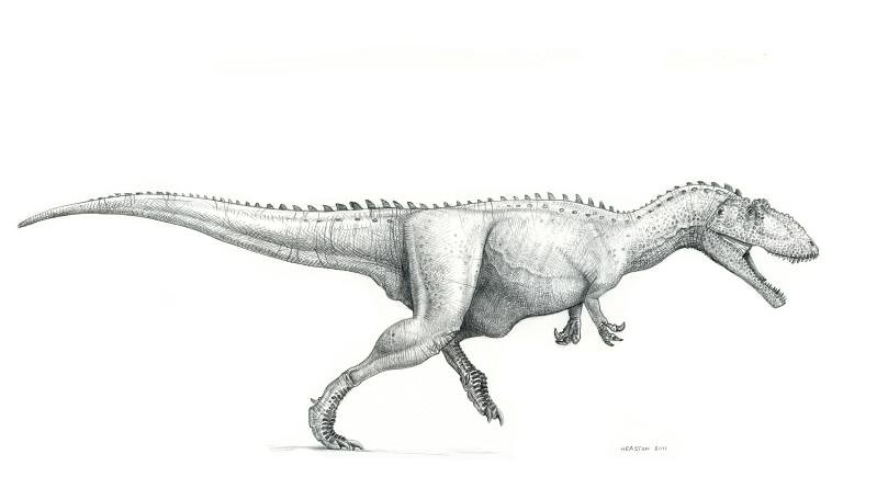 The World's Best Photos of drawing and theropod - Flickr ... Yangchuanosaurus Coloring Page