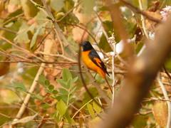P1150510 (babsybou) Tags: travel india birds silent watching kerala du valley yatra sud inde attapadi birdswatching babsybou malleeshwaramjunglelodge pettickal