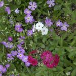 Wildflower_Center_085 thumbnail