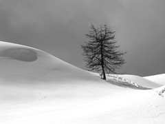Lonely pine (marcobillo) Tags: winter blackandwhite mountain snow abstract tree pine hiking hiver neve cai gita inverno montagna biancoenero valledaosta valtournenche lamagdeleine aostavalley ciaspole champlong ciastre