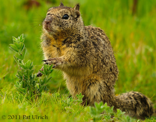 Caught in the Act - Pat Ulrich Wildlife Photography