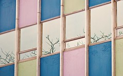 Modernist (jaxxon) Tags: pink blue windows abstract color colour macro reflection building tree green classic window colors architecture vintage lens prime nikon branch colours geometry branches pad officebuilding retro micro fixed abstraction 365 mm nikkor myfave vr afs 2011 d90 nikor project365 f28g gvr jaxxon jackcarson apicaday ayearinpictures nikond90 hpad nikkor105mmf28gvrmicro 365096 096365 desklickr project365096 jacksoncarson jacksondcarson ayearinphotographs hpadw project3652011 2011yip 3652011 yip2011 2011ayearinpictures 2011365096 project365962011