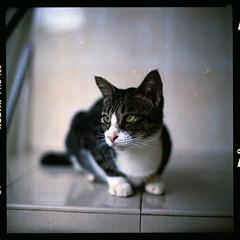(19/77) Tags: slr 120 film cat mediumformat malaysia 1977 negativescan tyre kiev88 kodakektacolorpro160 canoscan8800f arsat80mmf28 thecatwhoturnedonandoff myasin ldlportraits