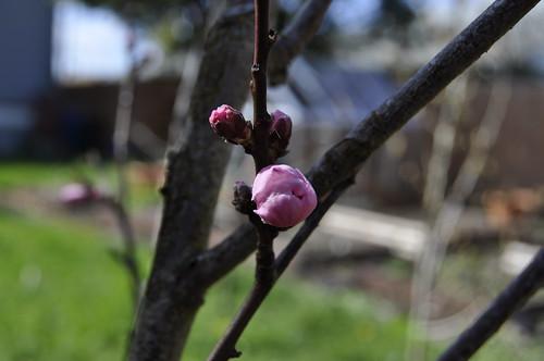garden April 11 2011 007