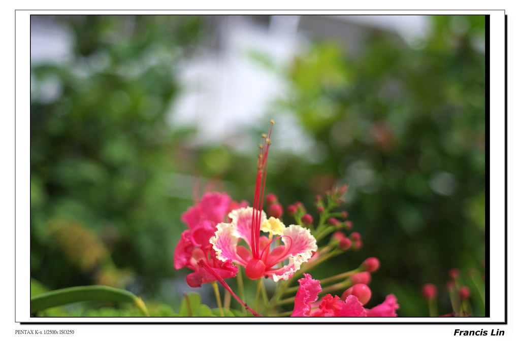 老鏡新拍Tamron 28mm f/2.8 Adaptall(關島)