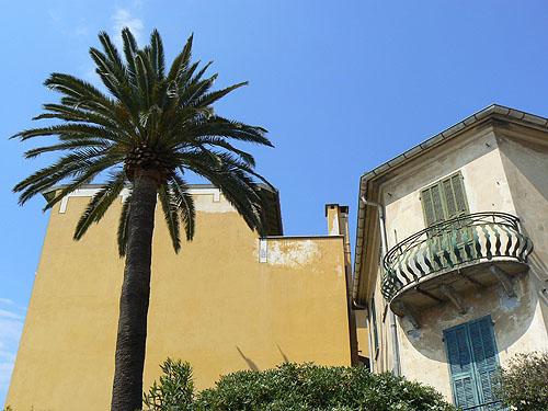 palmier italien.jpg