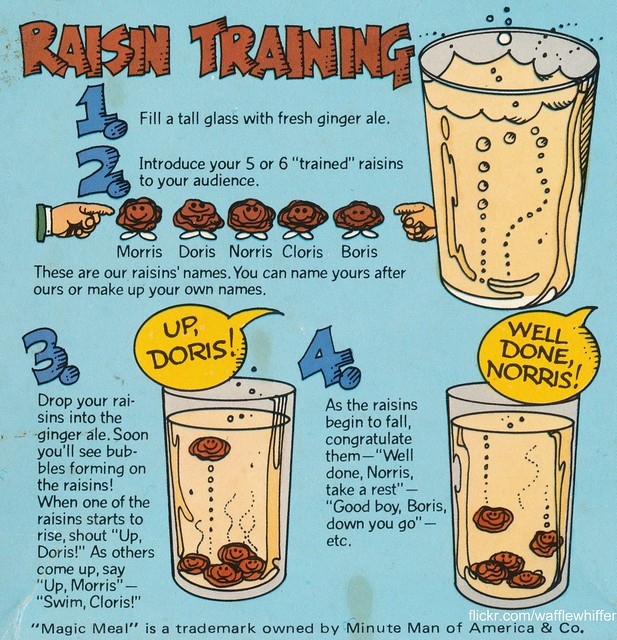 Raisin Training - 1981
