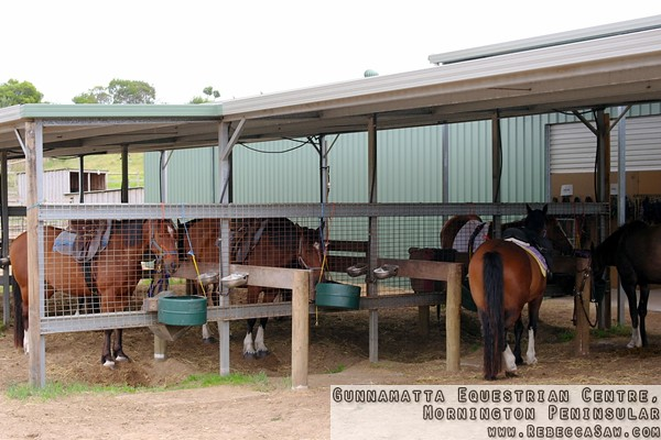 Gunnamatta Equestrian Centre, Mornington Peninsular-7