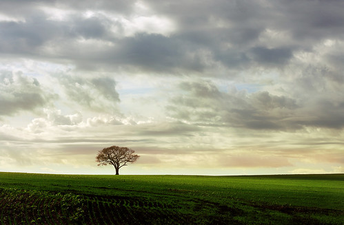 Ever felt like a lonely tree on a field... ? by AnnuskA  - AnnA Theodora