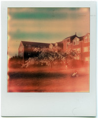 (Violet_3) Tags: film analog portland polaroid spring blossoms reedcollege polaroidlandcamera instantfilm pxpush theimpossibleproject