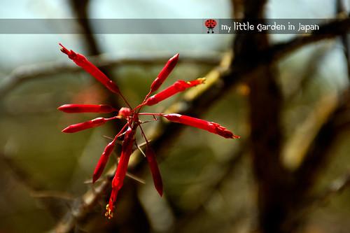 Spring-in-Sonora-desert-11